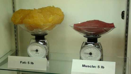 BMI vs. Body Fat