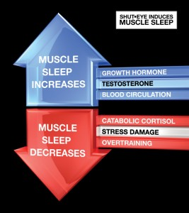 effects of sleep on muscle growth